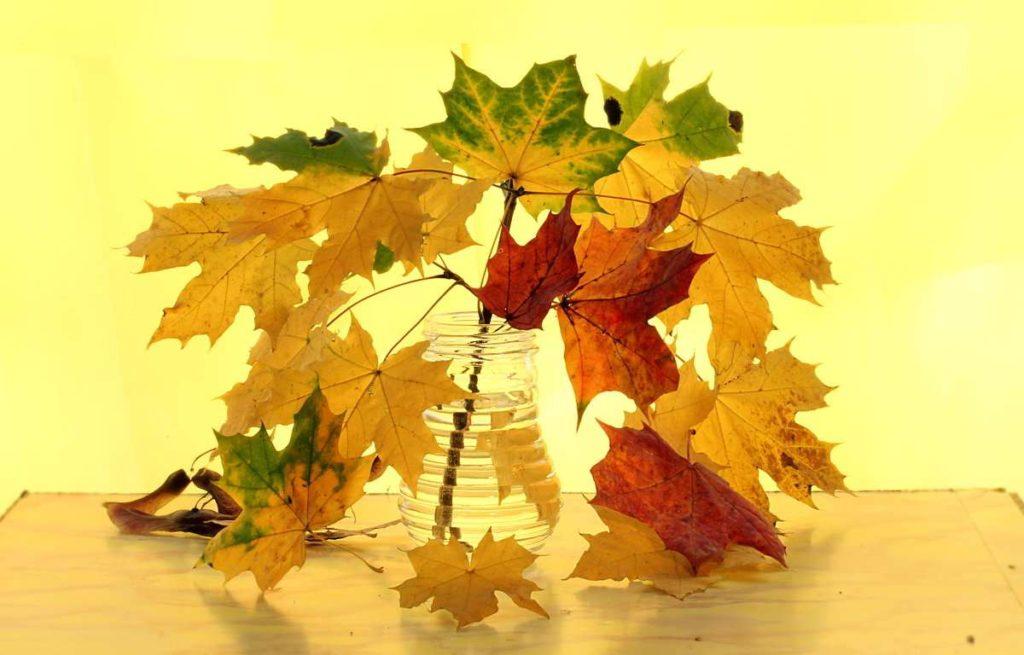 Гадание на осенних листьях